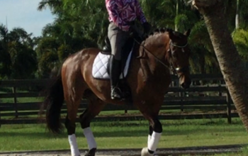 Horse Shopping Trip, Wellington, FL – June 2017